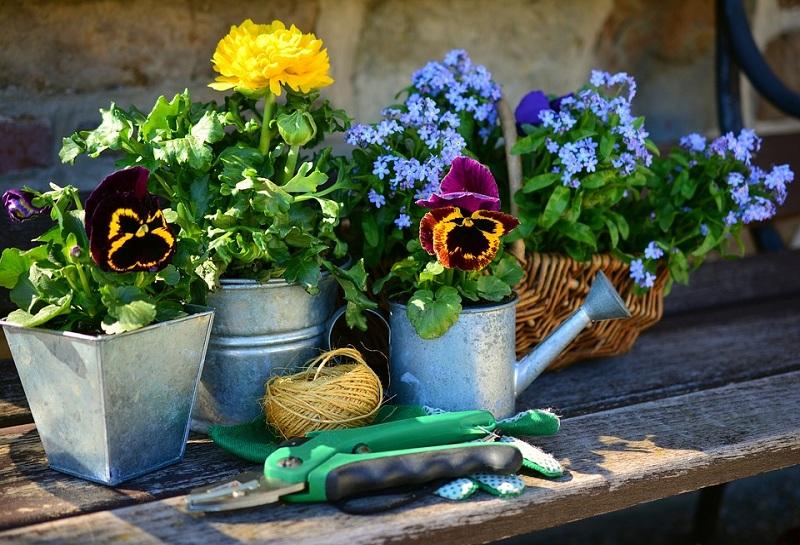 Best Plants to Grow in Your Garden